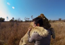 Hugs From Lions