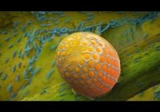 Louie Schwartzberg: Hidden Miracles of the Natural World