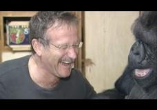 Koko & Robin Williams Connect