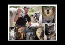 My Wolf Connection: Teo Alfero at TEDxYouth@SantaMonica