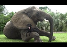 Elephant and Dog = Best Friends