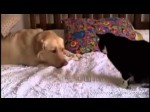 Dogs Annoying Cats with Friendship