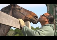 Life Off the Tracks: Retired Racehorses Get a 2nd Chance