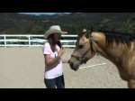 Equine Therapy – Ways2Heal Episode 1